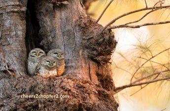 Full Nest Empty Nest