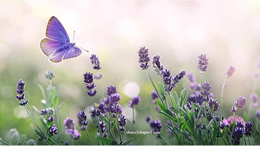 Field of lavender with butterfly for Why Forgiveness is Important Life page